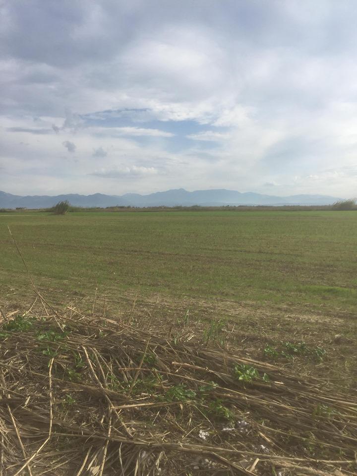 Πωλείται χωράφι 10 στρεμμάτων στο Γαλατά Μεσολογγίου